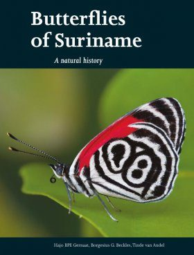 Butterflies of Suriname