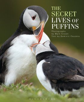 The Secret Lives of Puffins