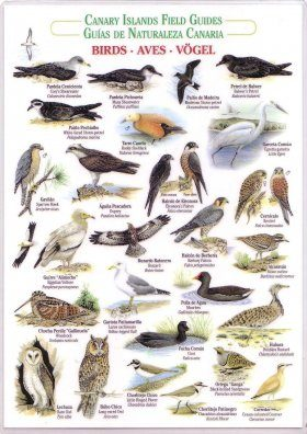 Birds (Waterproof Field Guide)