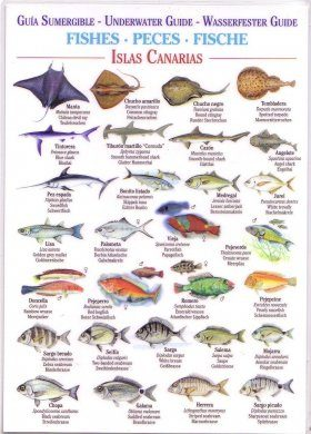 Fishes (Waterproof Field Guide)