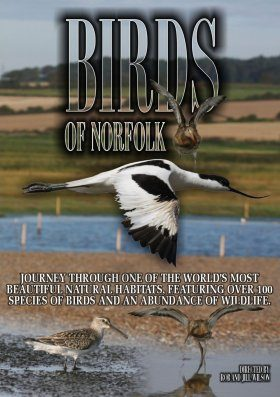 Birds of Norfolk (Region 2)