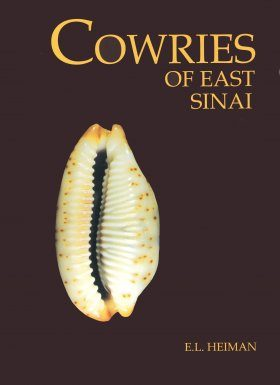 Cowries of East Sinai