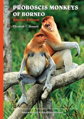 Proboscis Monkeys of Borneo