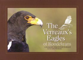 The Verreaux's Eagles of Roodekrans