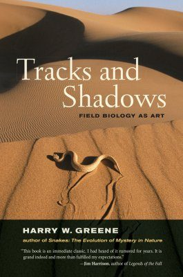 Tracks and Shadows