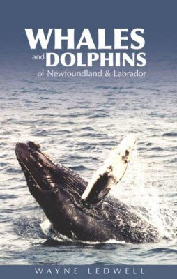 Whales and Dolphins of Newfoundland & Labrador