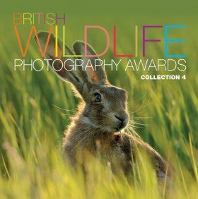 British Wildlife Photography Awards, Collection 4