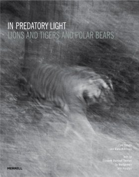 In Predatory Light