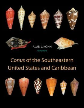 Conus of the Southeastern United States and Caribbean