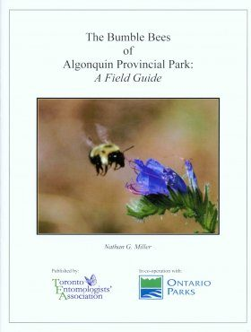 The Bumble Bees of Algonquin Provincial Park