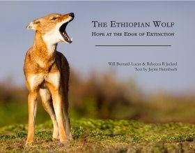 The Ethiopian Wolf