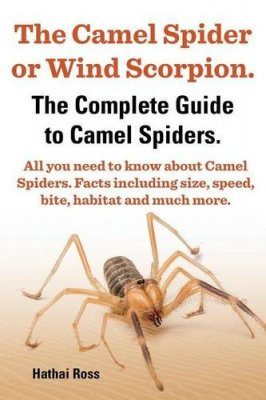 The Camel Spider or Wind Scorpion