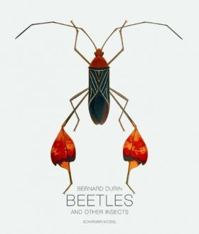 Bernard Durin: Beetles and Other Insects
