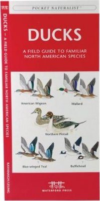 Ducks: A Field Guide to Familiar North American Species