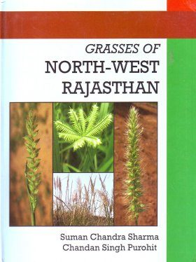 Grasses of North-West Rajasthan
