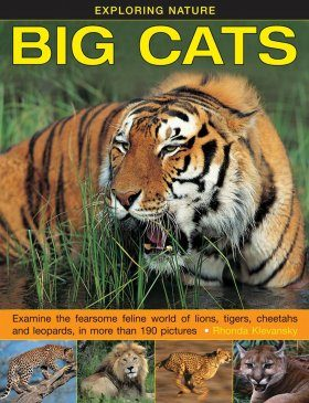 Exploring Nature: Big Cats