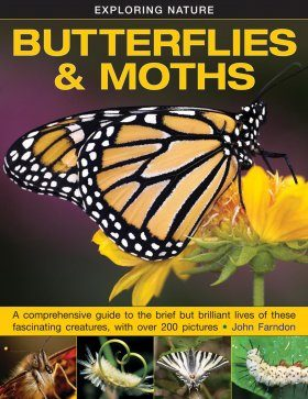 Exploring Nature: Butterflies & Moths