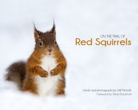 On the Trail of Red Squirrels