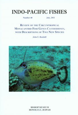 Review of the Circumtropical Monacanthid Fish Genus Cantherhines, with Descriptions of Two New Species