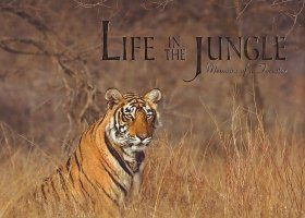 Life in the Jungle
