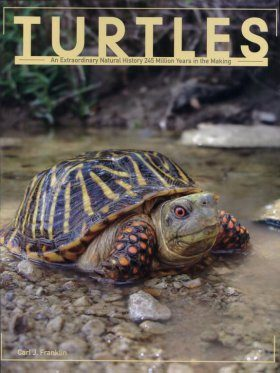 Turtles: An Extraordinary Natural History 245 Million Years in the Making