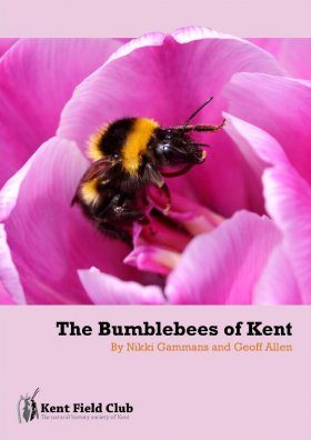 The Bumblebees of Kent