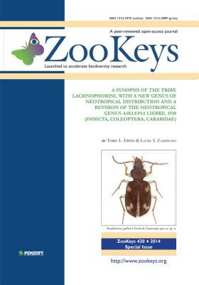 ZooKeys 430: A Synopsis of the Tribe Lachnophorini, With a New Genus of Neotropical Distribution and a Revision of the Neotropical Genus Asklepia Liebke, 1938 (Insecta, Coleoptera, Carabidae)