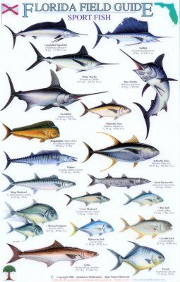 Florida Field Guide, Sport Fish