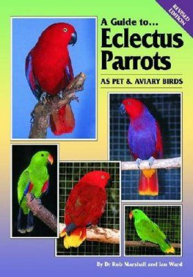 A Guide to Eclectus Parrots