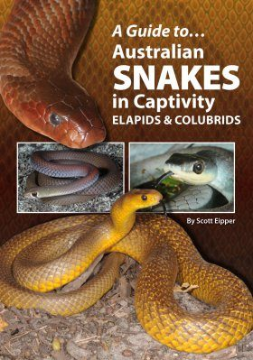 A Guide to Australian Snakes in Captivity