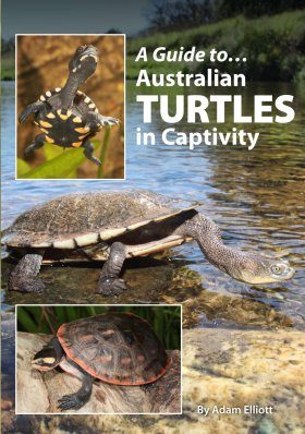 A Guide to Australian Turtles in Captivity