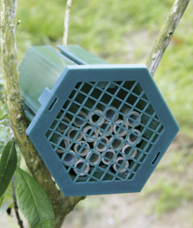 Red Mason Bee Nest Box