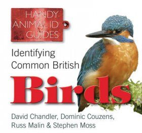 Identifying Common British Birds