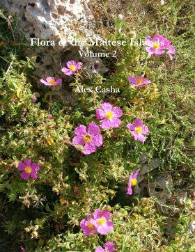 Flora of the Maltese Islands, Volume 2