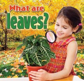 What are Leaves?