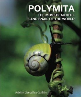 Polymita: The Most Beautiful Land Snail of the World