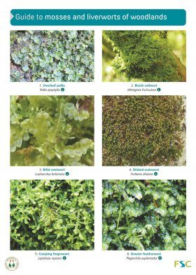 Guide To Mosses And Liverworts Of Woodlands Martin Godfrey Nhbs Book Shop