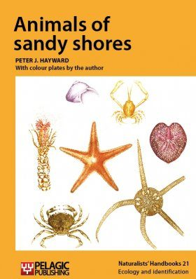 Animals of Sandy Shores