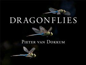 Dragonflies: Magnificent Creatures of Water, Air and Land