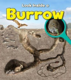 Look Inside a Burrow