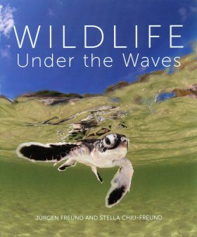 Wildlife Under the Waves