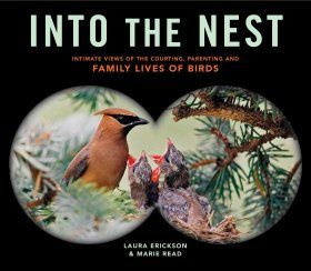 Into the Nest