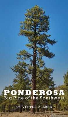 Ponderosa: Big Pine of the Southwest