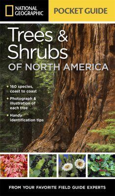 Trees & Shrubs of North America