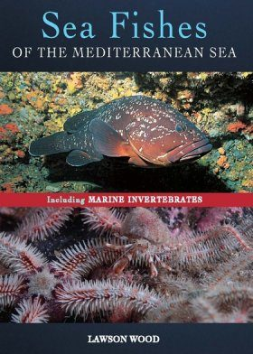 Sea Fishes of the Mediterranean