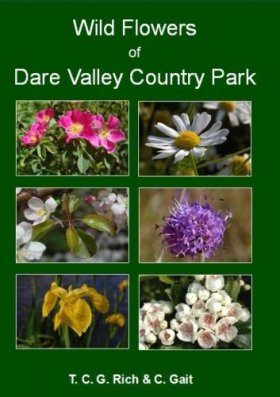 Wild Flowers of Dare Valley Country Park
