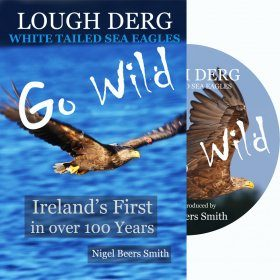 Ireland's First in Over 100 Years: Lough Derg White Tailed Sea Eagles (All Regions)