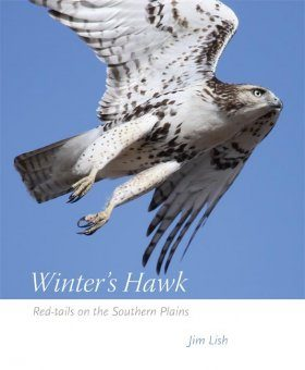 Winter's Hawk