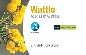 Wattle: Acacias of Australia
