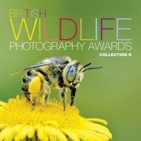 British Wildlife Photography Awards, Collection 6